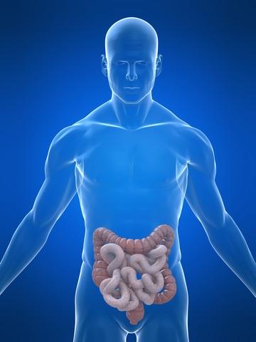 diaree diaree umană