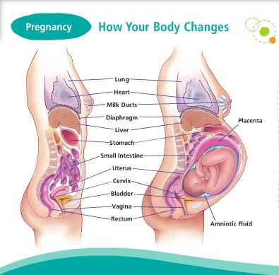 cum se schimba corpul in sarcina